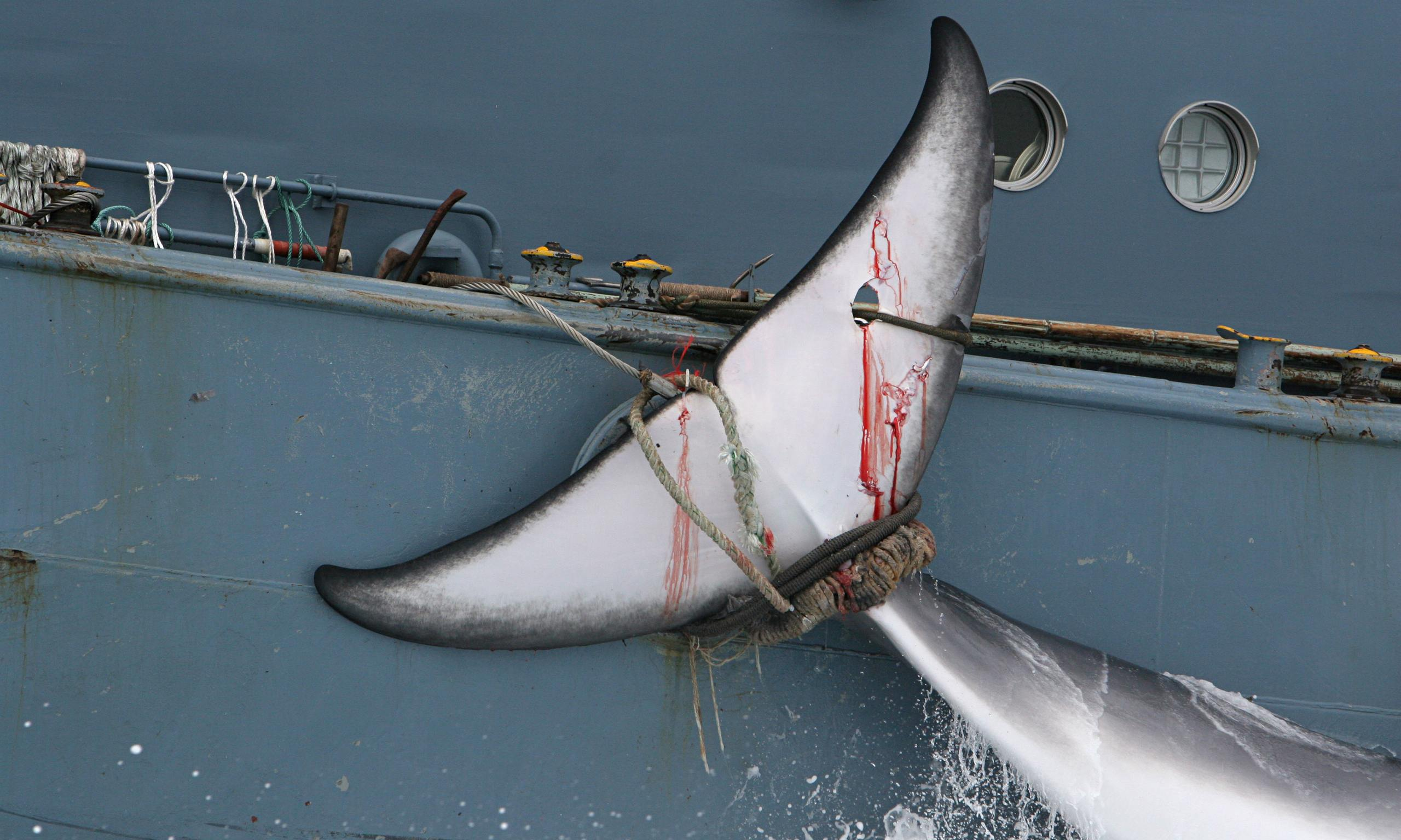 science in the news coursework whaling