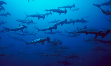 Five shark species win protection against finning trade
