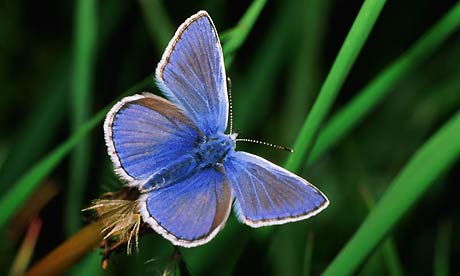 British farmland butterflies bounce back after 2013 summer, survey finds