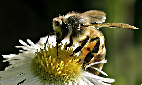 UK faces food security catastrophe as honeybee numbers fall, scientists warn