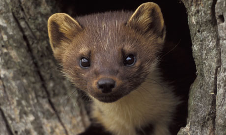Co Op Helping Welsh Wildlife Thrive Guardian
