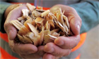 Biomass energy or how to turn your old kitchen into electricity
