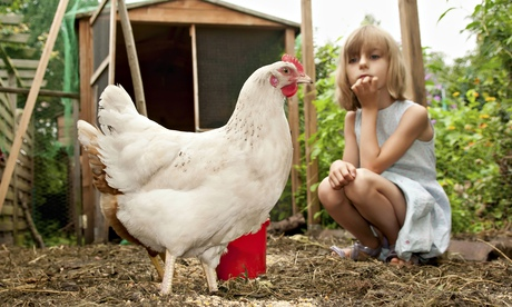 Hens for hire: the chickens teaching children where their food comes from