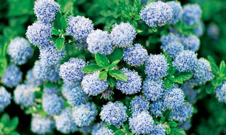 Garden Design Garden Design with The best plants and flowers for – Plants for Winter Garden