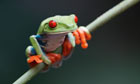 Thumbnail for Conservation of an endangered species: the female ... - The Guardian