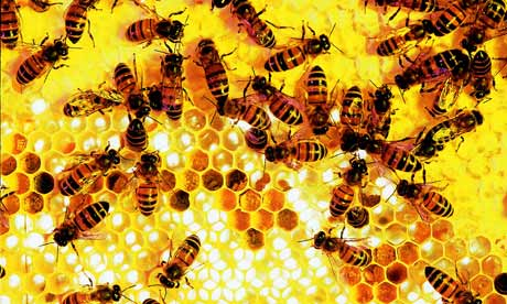 Killing Google Reader is like killing the bees: we'll all be worse off