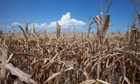 World Bank issues hunger warning after droughts in US and Europe