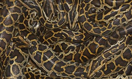 New alliance targets illegality and unsustainability in the python trade