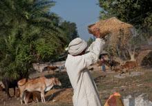 A man winnows rice in Satgharwa village