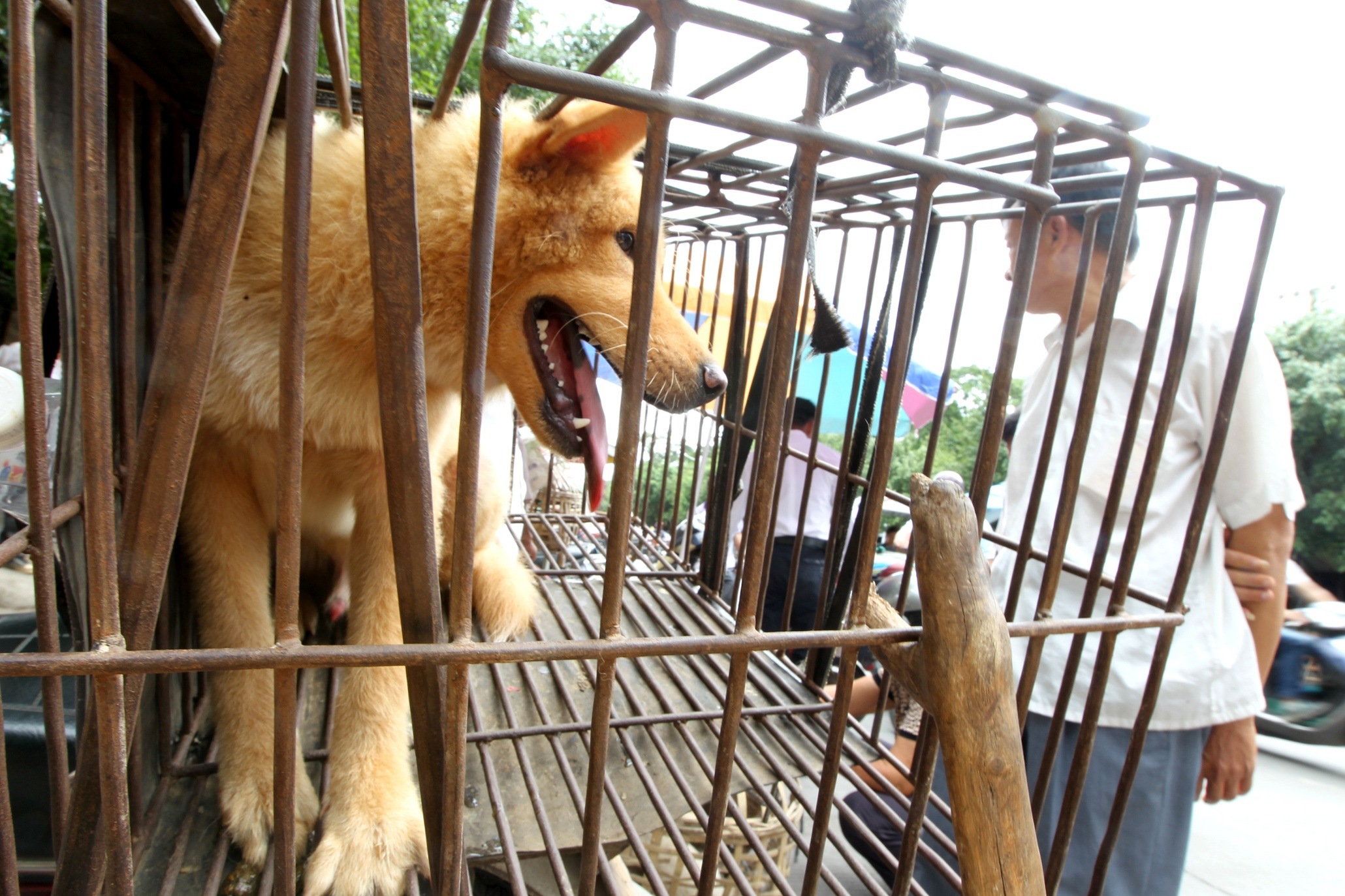 yulin single men Humane society international is in yulin they were chased by groups of unidentified men who would rip their banners i am the blog editor of a humane nation.