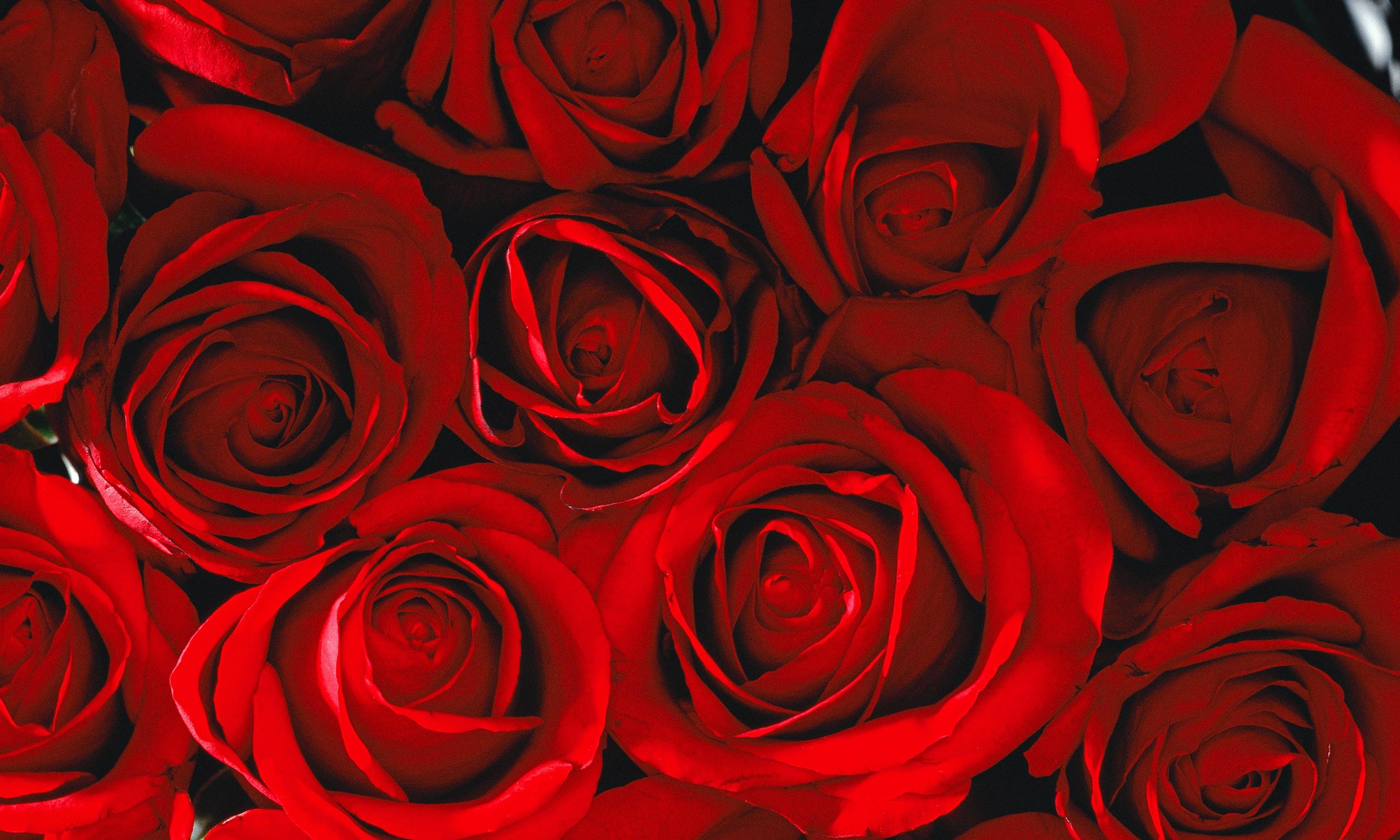 Red Rose Tumblr...