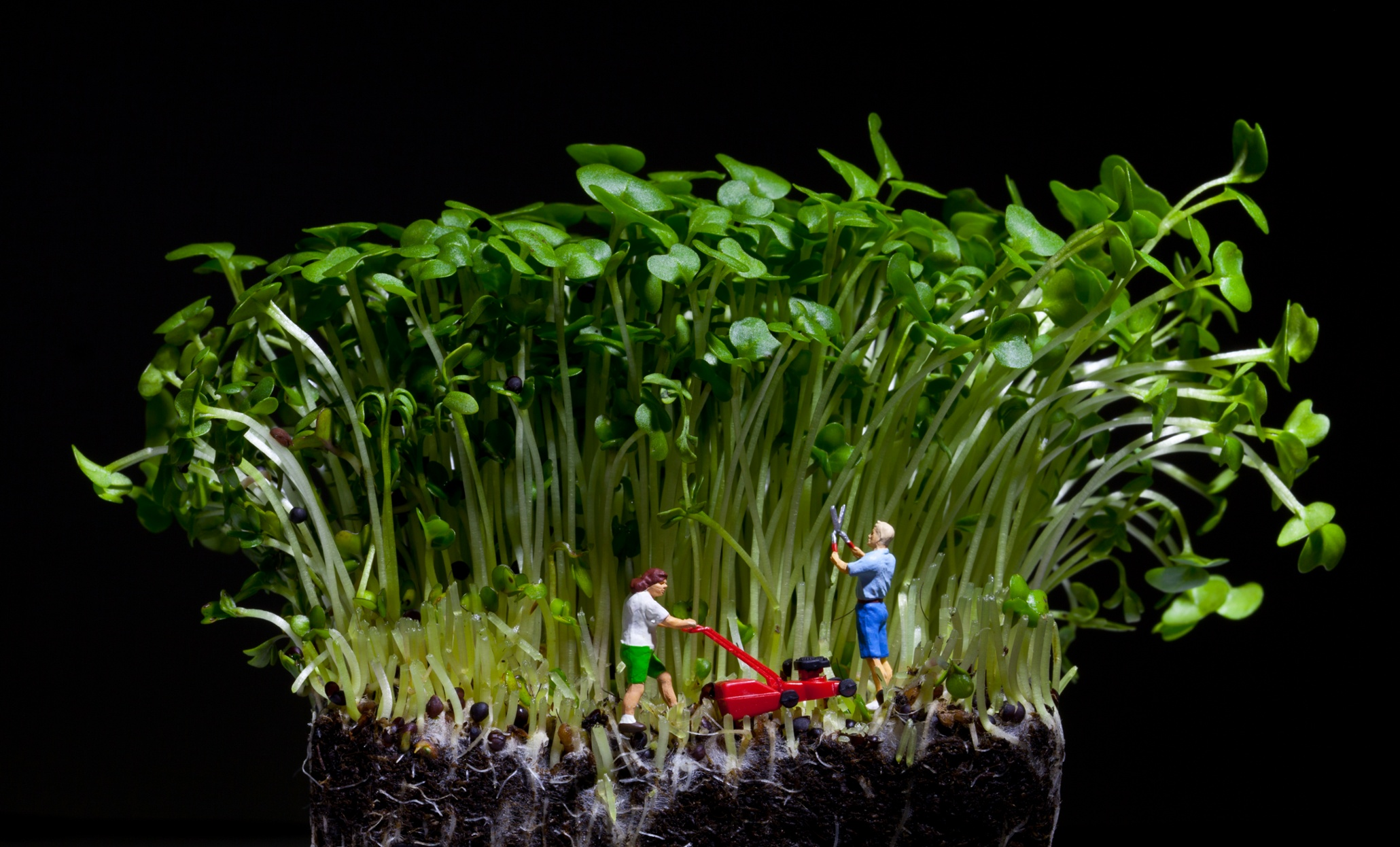 David gilliver 39 s little people in pictures art and design the guardian for Tending to the garden