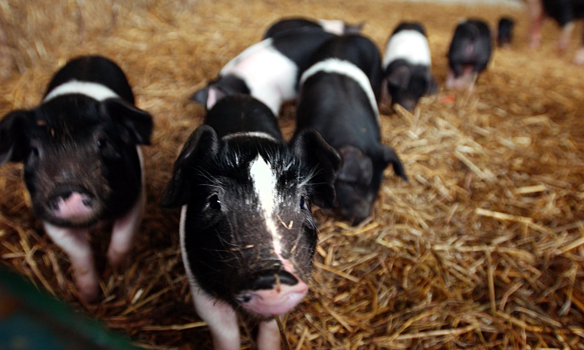 Why it's time to stop romanticising where our food comes from