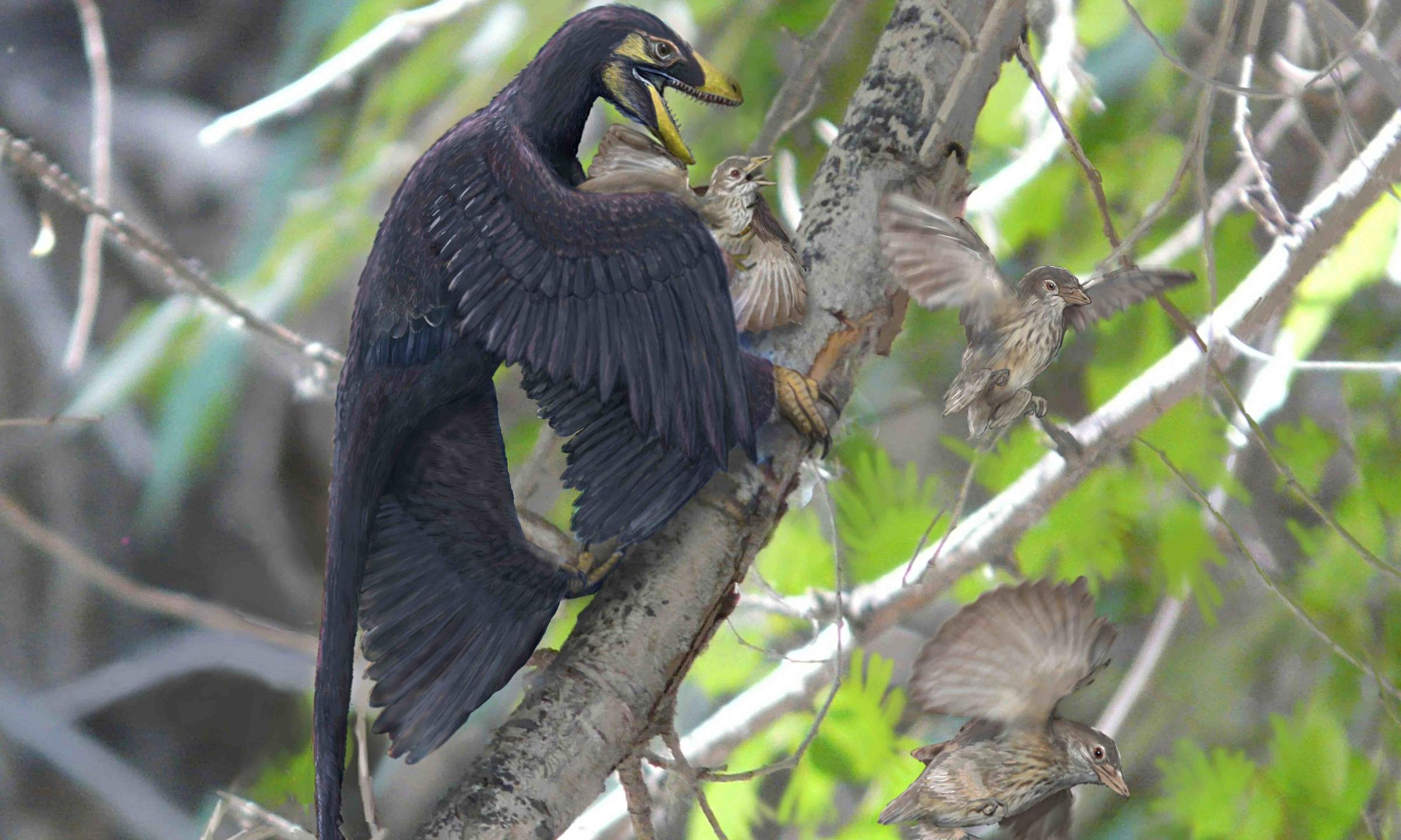 Трансформация в птицу 4 фотография