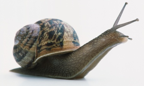 Do snails have eyes? A 17thC 'mythbuster' investigates