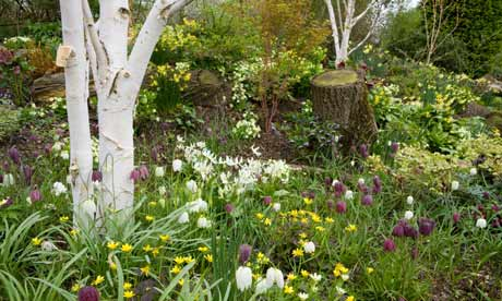 garden design with anatomy of a garden a woodland garden life and style the guardian