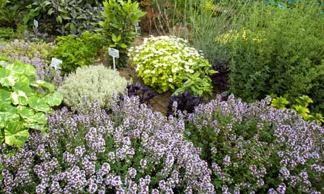 Garden Design Garden Design with Herb gardens to visit Telegraph