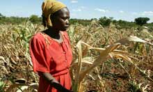 Thumbnail for UN warns of looming worldwide food crisis in 2013