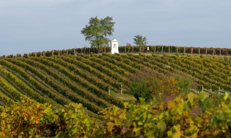 https://static-secure.guim.co.uk/sys-images/Travel/Pix/gallery/2011/11/9/1320847372383/vineyard-Southern-Moravia-007.jpg